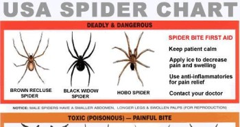 USA Spider Identification Chart