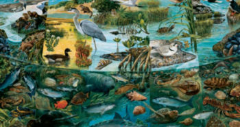 FREE Estuaries Scenes of Transition Poster