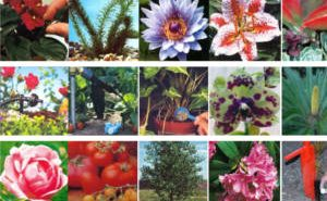 FREE Plant Food Sample from Gardenlink